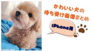 犬の無料待ち受け画像 iPhone用